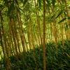 竹、竹、武。