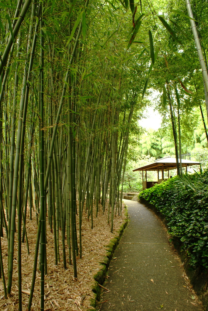 Overwhelming Bamboos