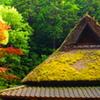 苔茂る屋根に…