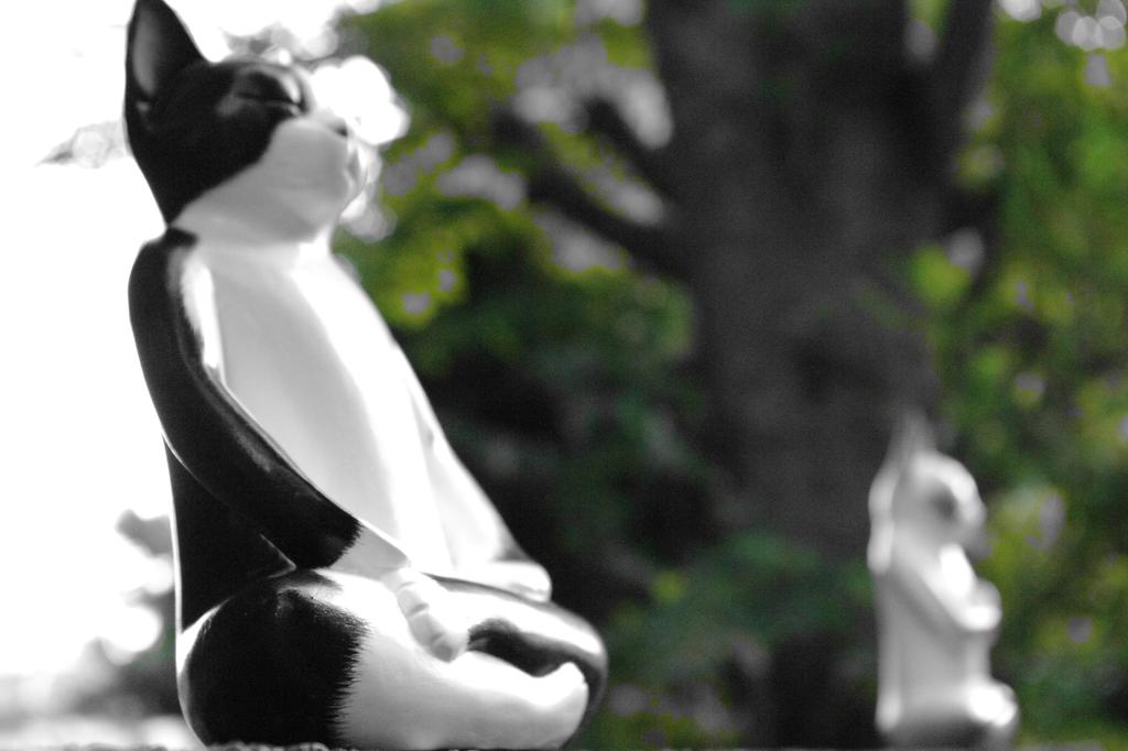 谷中のにて修行中の守猫