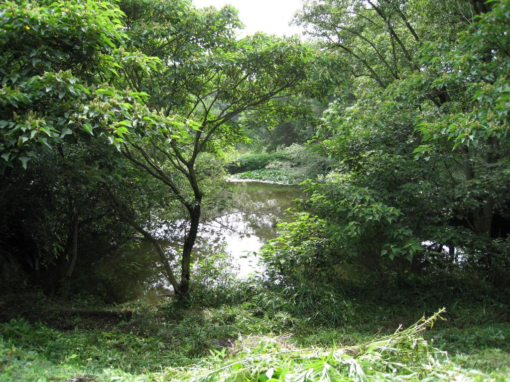ジャングルの入り口