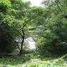 CANON Canon IXY DIGITAL 910 ISで撮影した風景(ジャングルの入り口)の写真(画像)