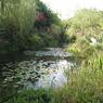 CANON Canon IXY DIGITAL 910 ISで撮影した植物(モネの庭)の写真(画像)