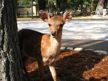 バンビが姿を現した