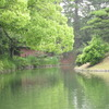 木と池の間に