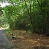 竹林散歩道