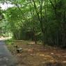 CANON Canon IXY DIGITAL 910 ISで撮影した風景(竹林散歩道)の写真(画像)