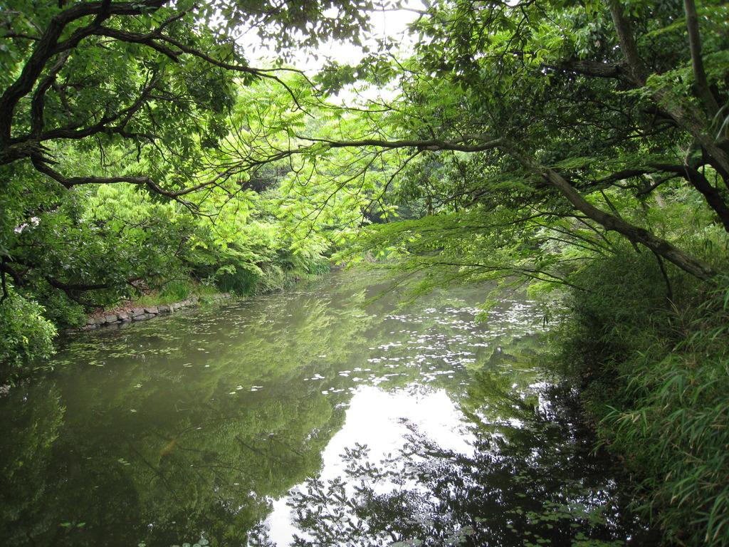 新緑川景色