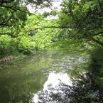 CANON Canon IXY DIGITAL 910 ISで撮影した風景(新緑川景色)の写真(画像)
