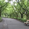 CANON Canon IXY DIGITAL 910 ISで撮影した(緑街道)の写真(画像)
