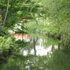 木々映す川面