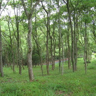 CANON Canon IXY DIGITAL 910 ISで撮影した風景(木立)の写真(画像)
