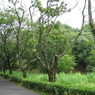 CANON Canon IXY DIGITAL 910 ISで撮影した風景(哀愁枯れ木)の写真(画像)