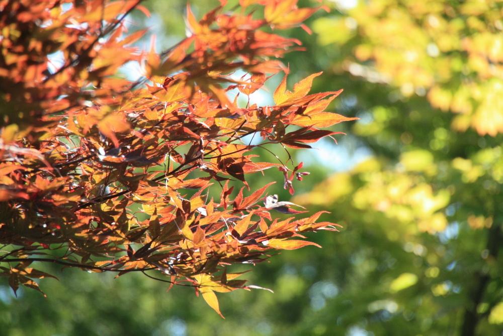 もう秋ですわ
