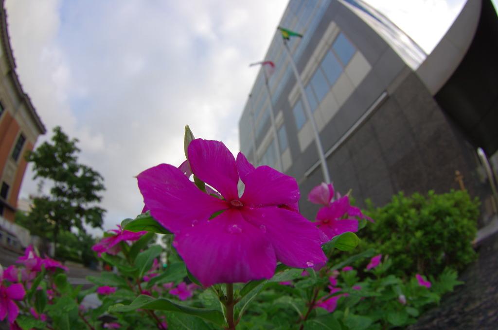 FISH-EYE 街の花