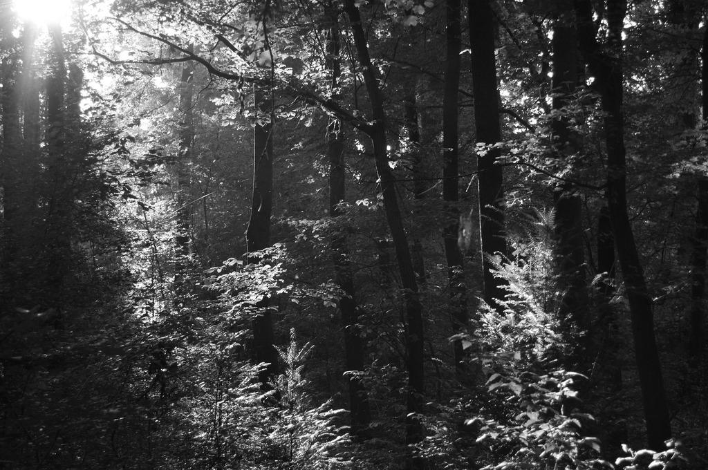 Das in den Wald scheinende Licht