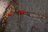 Das rote Blütenblatt