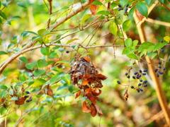 蜘蛛の巣にからまる葉