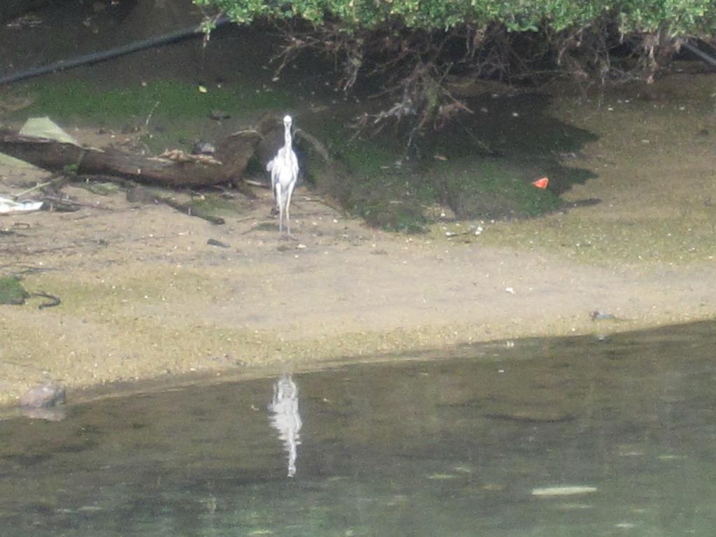 水目に立つ鳥
