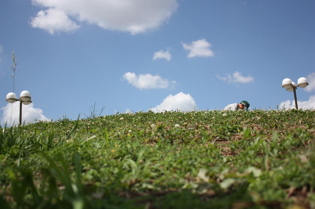 シロツメクサの丘