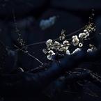 OLYMPUS E-520で撮影した植物(東御苑梅林坂にて)の写真(画像)