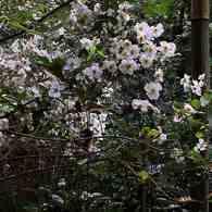KODAK KODAK EASYSHARE Z915 DIGITAL CAMERAで撮影した植物(北鎌倉・明月院にて)の写真(画像)