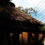 OLYMPUS E-520で撮影した風景(北鎌倉・明月院にて)の写真(画像)
