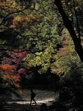 紅葉の三四郎池