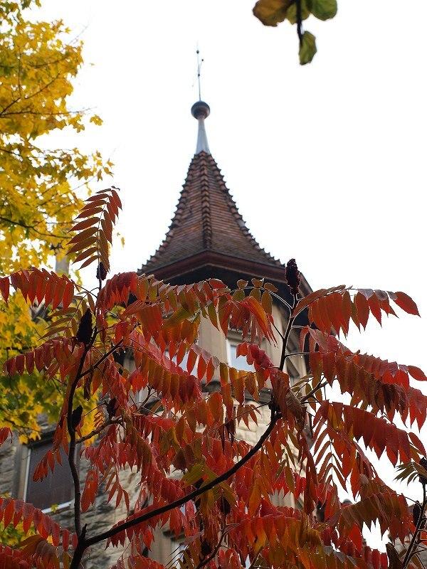 ウルシの紅葉(シャウハウゼン)