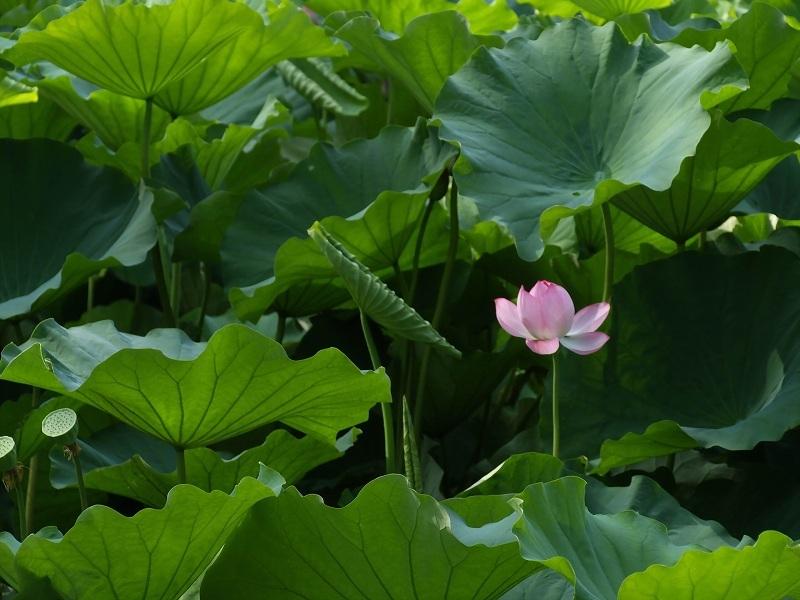 咲き初めの花