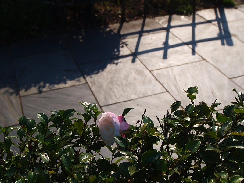山茶花の咲いた道