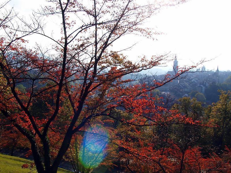 サクラの紅葉(バラ公園」