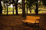 日陰のベンチ