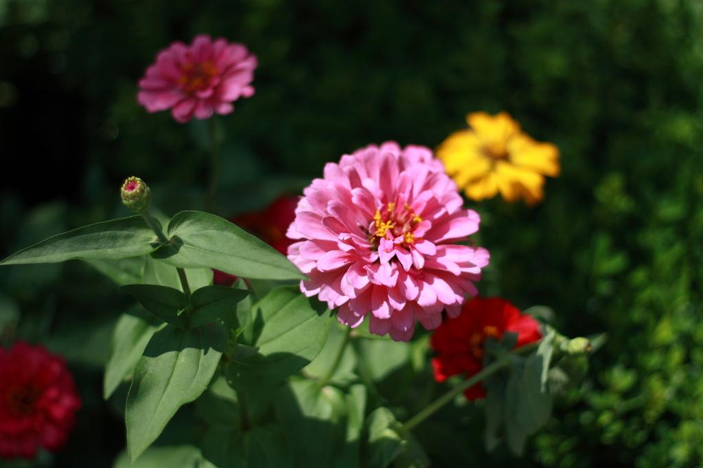 ピンクな花