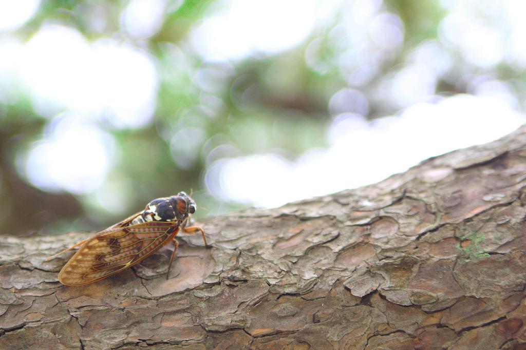 蝉の羽休め