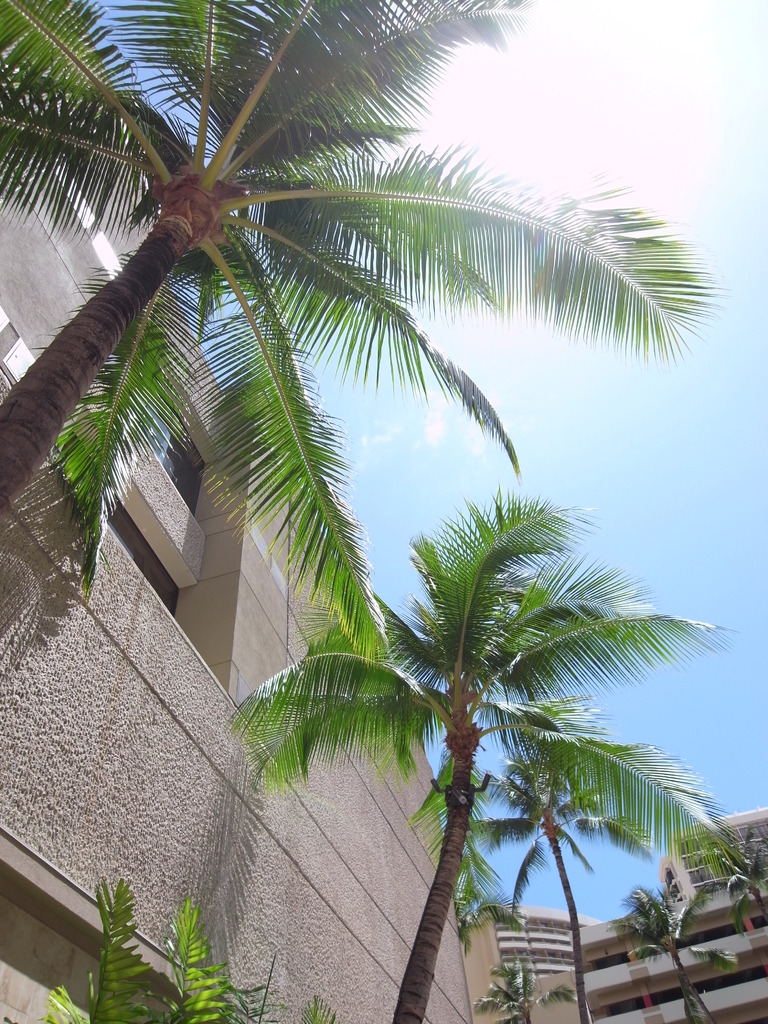 Royal Hawaiian Center前にて