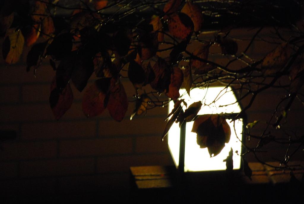 秋が来ました。