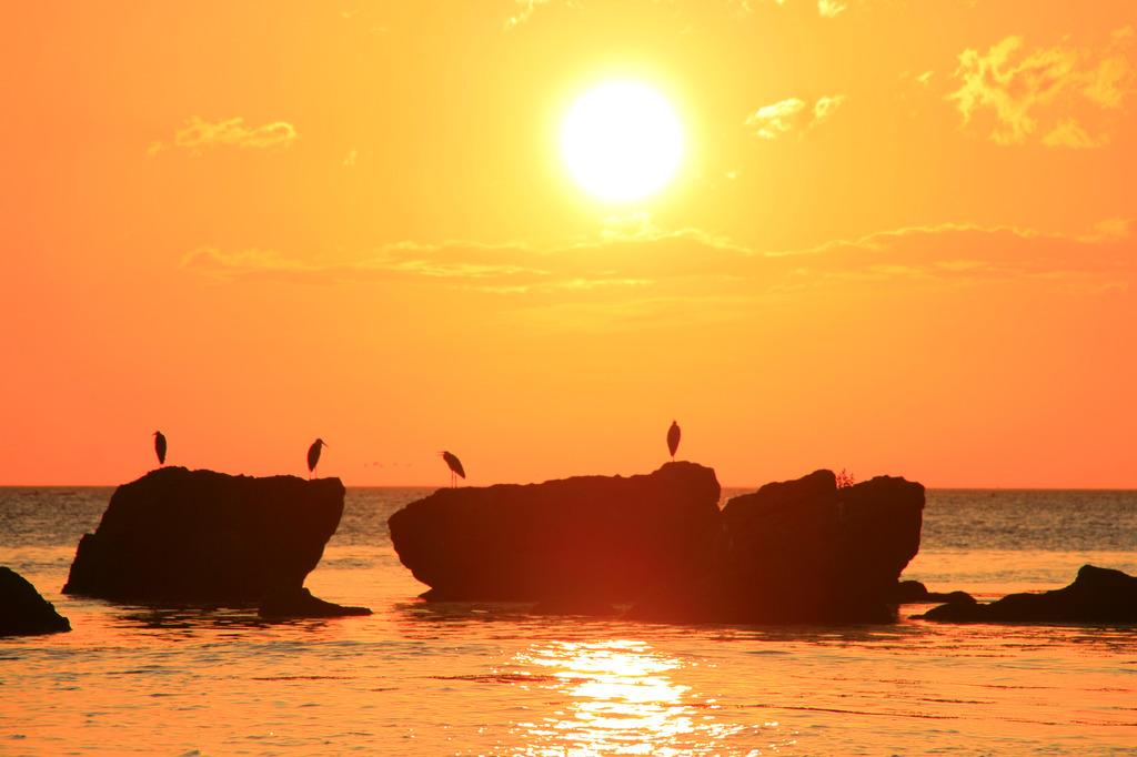 夏の夜明け 黄金色に染まる