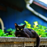 PENTAX PENTAX K20Dで撮影した動物(cats)の写真(画像)