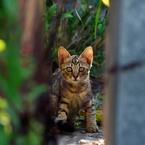 PENTAX PENTAX K20Dで撮影した動物(隠れていた子猫)の写真(画像)