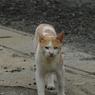 PENTAX PENTAX K20Dで撮影した動物(父親)の写真(画像)