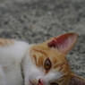 PENTAX PENTAX K20Dで撮影した動物(ごろりん)の写真(画像)