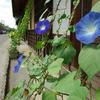 宿場町の花