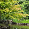 旧古河庭園:初夏