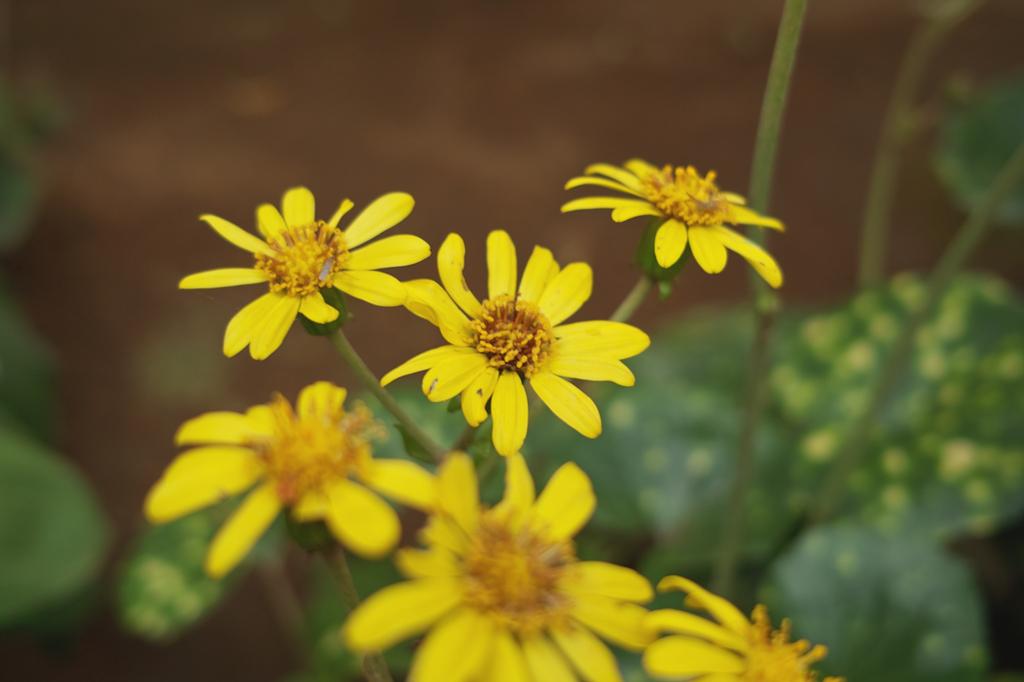 庭先の黄色