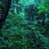 雨の森の風景