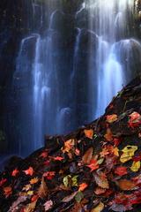 滝 落ち葉 岩 光