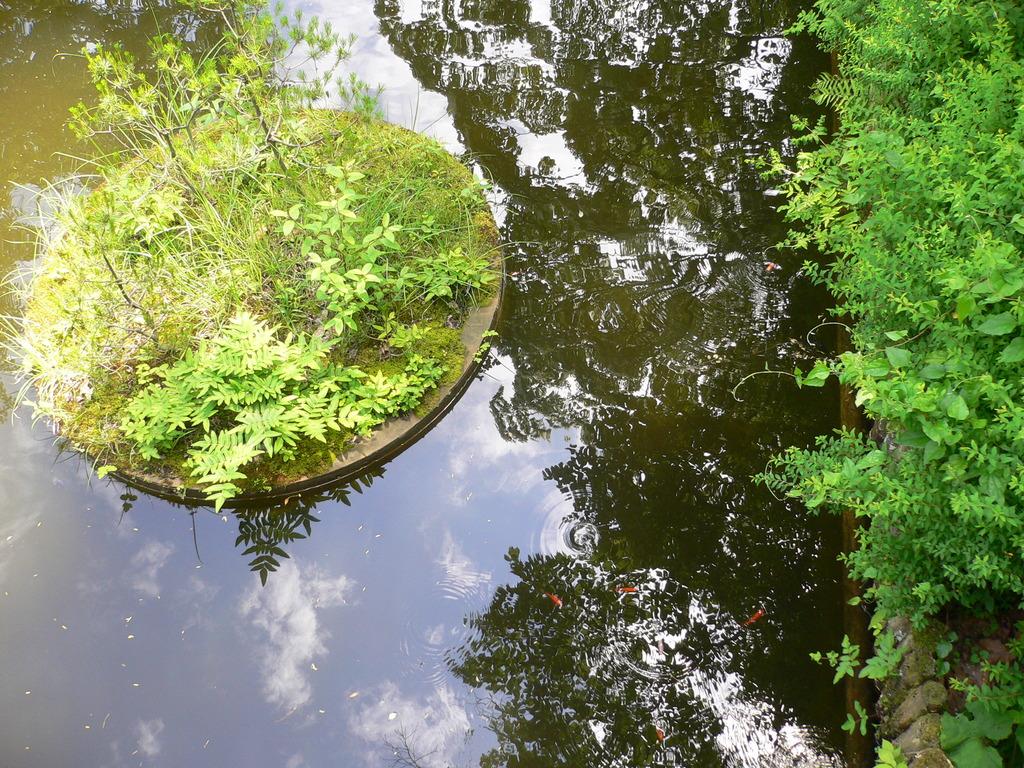 水に映る初夏の空