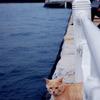 山下公園の聴海猫