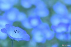 青い世界の夢を見た
